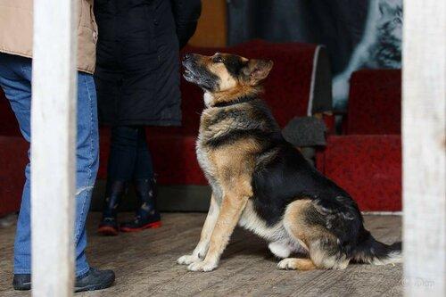 Рэкс собака из приюта догпорт