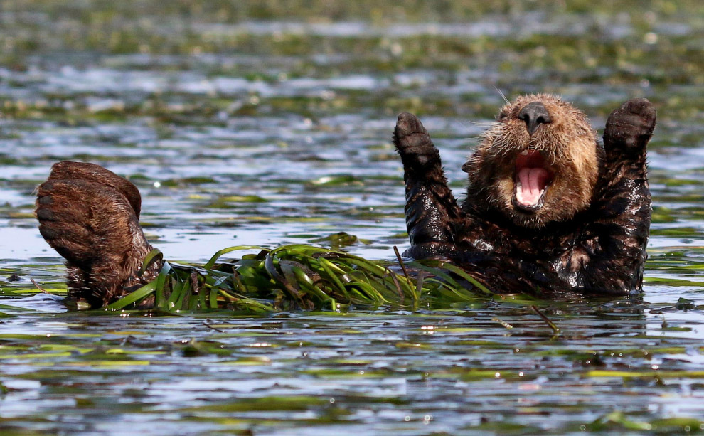4. Обнимашки. (Фото Melissa Usrey | Comedy Wildlife Photography Awards):