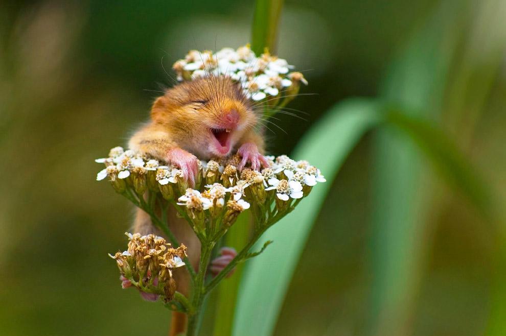 19. Певцы. (Фото Daniel Trim | Comedy Wildlife Photography Awards):