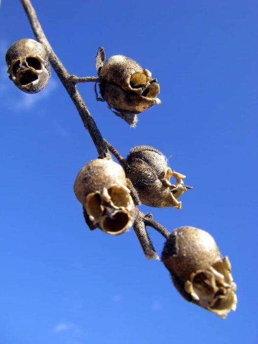 Прикольные растения