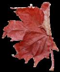 natali_14_fall_leaf17.png