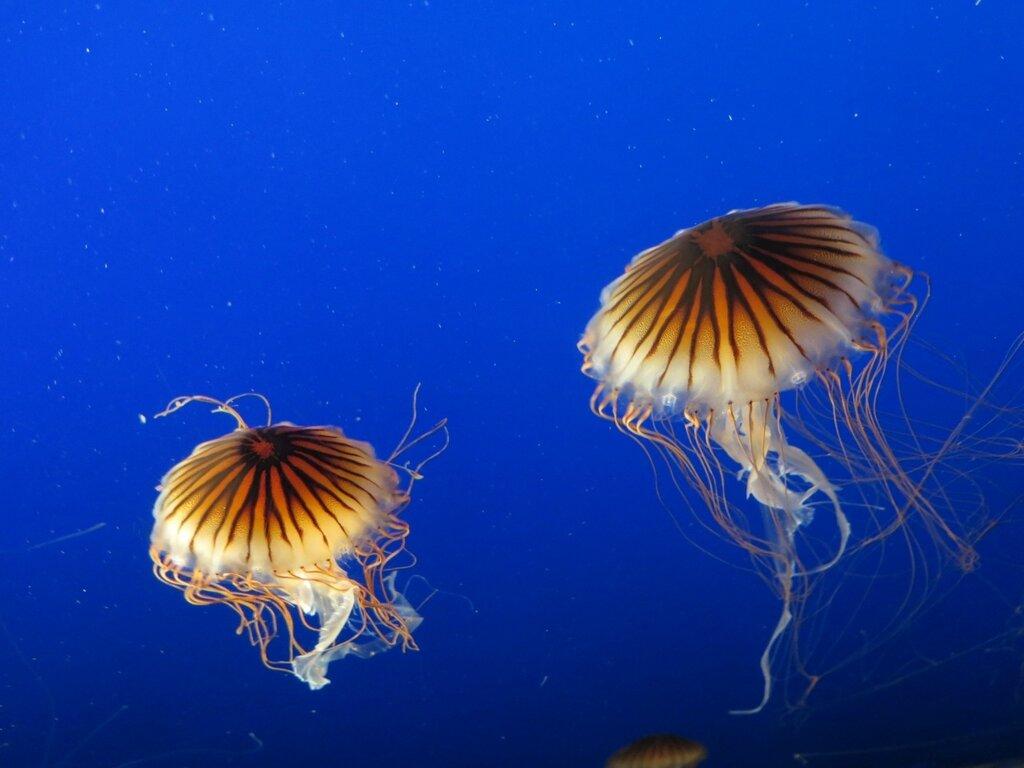 Vancouver Aquarium 1.jpg