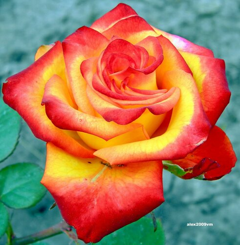Горит огонь любви прекрасной!