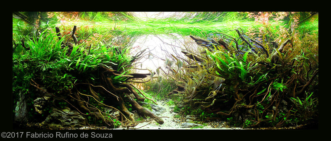 "Top 10 на 2017 AGA International Aquascaping Contest. Название: ""Origens"". Fabricio Rufino de Souza."