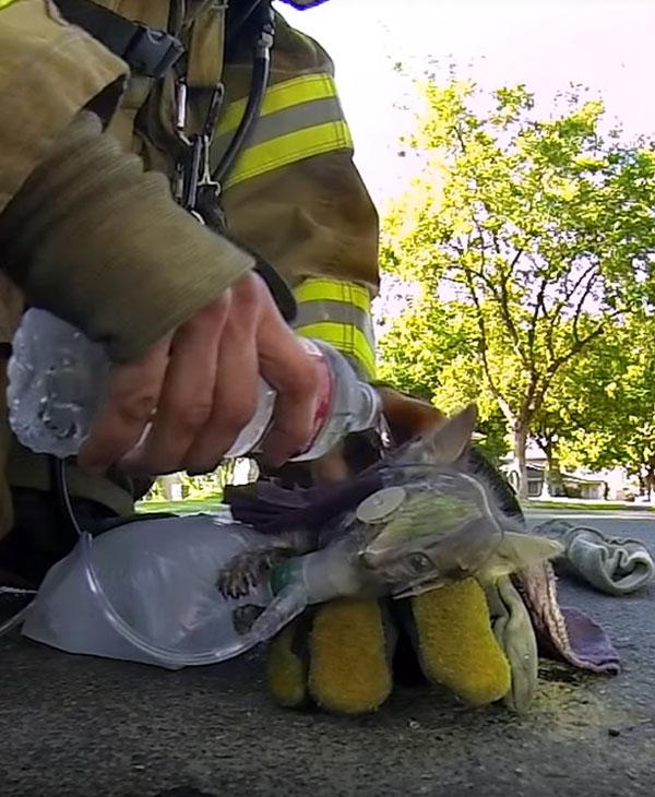 пожарные сумели спасти котенка фото