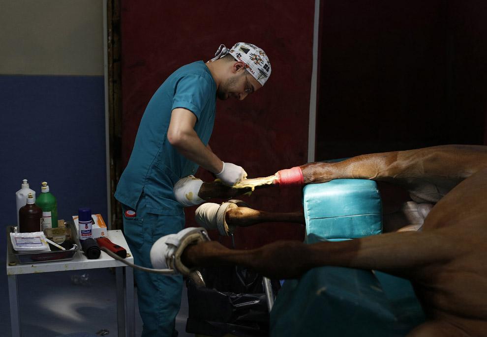 15. Идет операция. Госпиталь для лошадей, Стамбул, 4 марта 2015. (Фото Murad Sezer | Reuters):