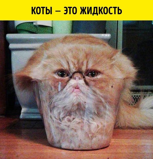 © imgur     Одно изсумасбродных открытий сделал Марк-Антоний Фардин: ондоказал, что кот
