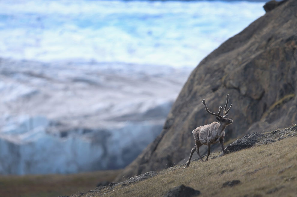 Основные народы на территории Гренландии — это гренландские эскимосы (на местном языке — инуиты), со