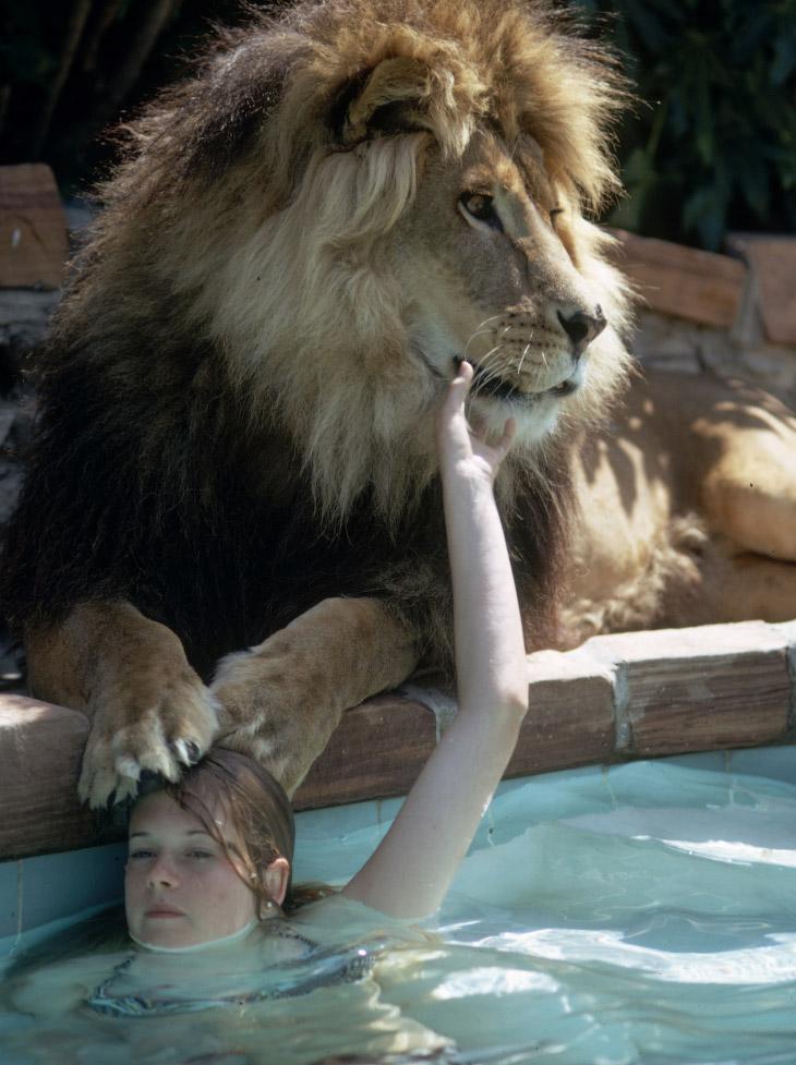 2. Дрессировщик Рон Оксли посоветовал звёздной семейке пожить вместе со львом некоторое время, чтобы