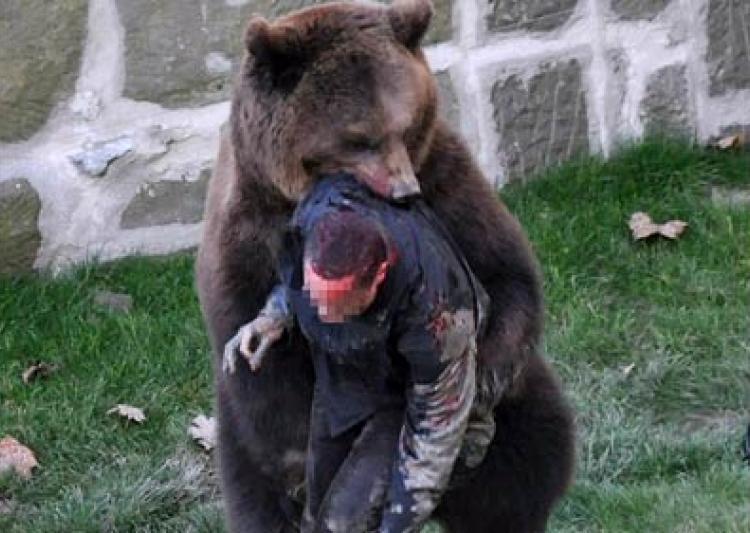 Он прыгнул в вольер к медведям (1 фото)