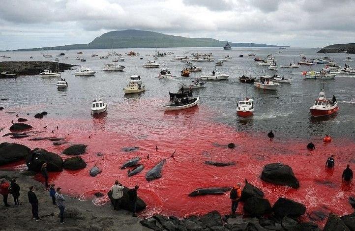 Кровавые берега Дании (1 фото)