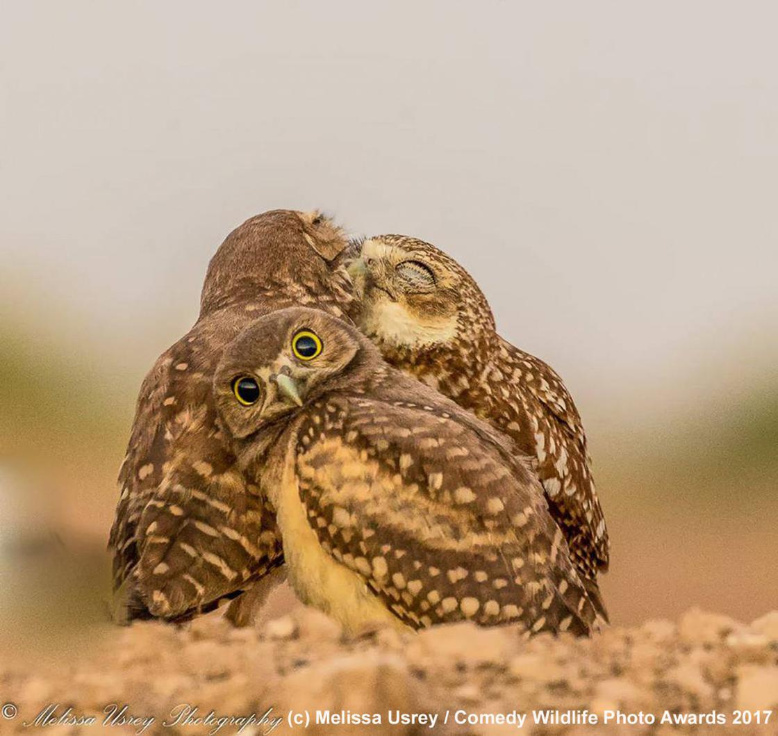 Comedy Wildlife 2017 – The finalists of the most offbeat photo contest