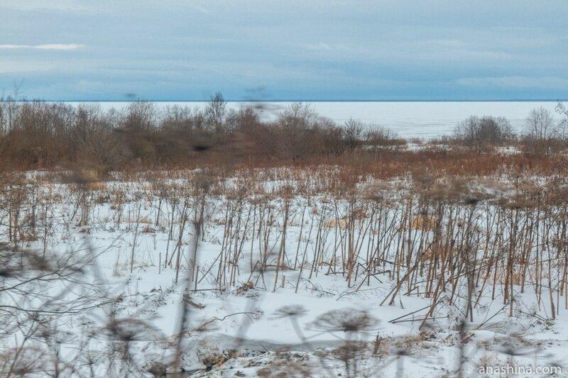 Берег Рыбинского водохранилища