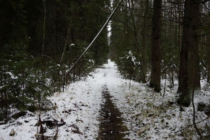 насыпь узкоколейной железной дороги красницы - каушта