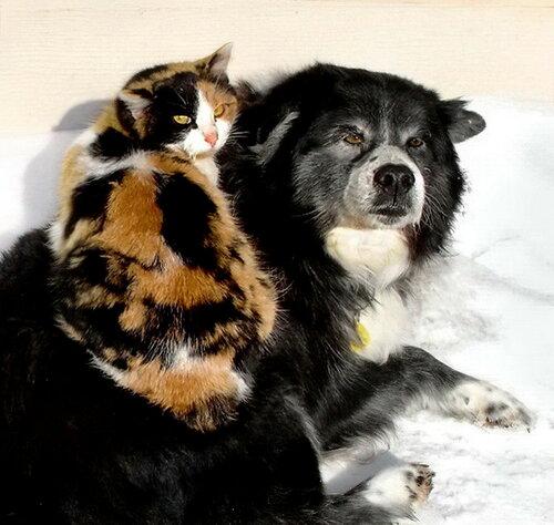 Любовь и дружба на долгие года