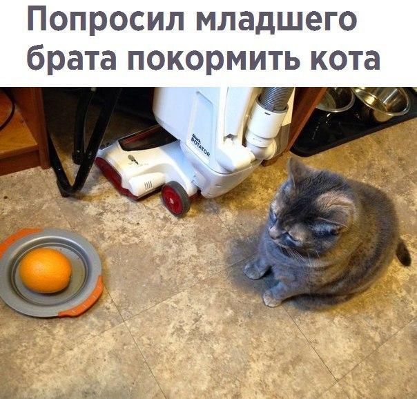 Попросил младшего брата покормить кота
