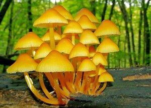 Желтые зонтики.
