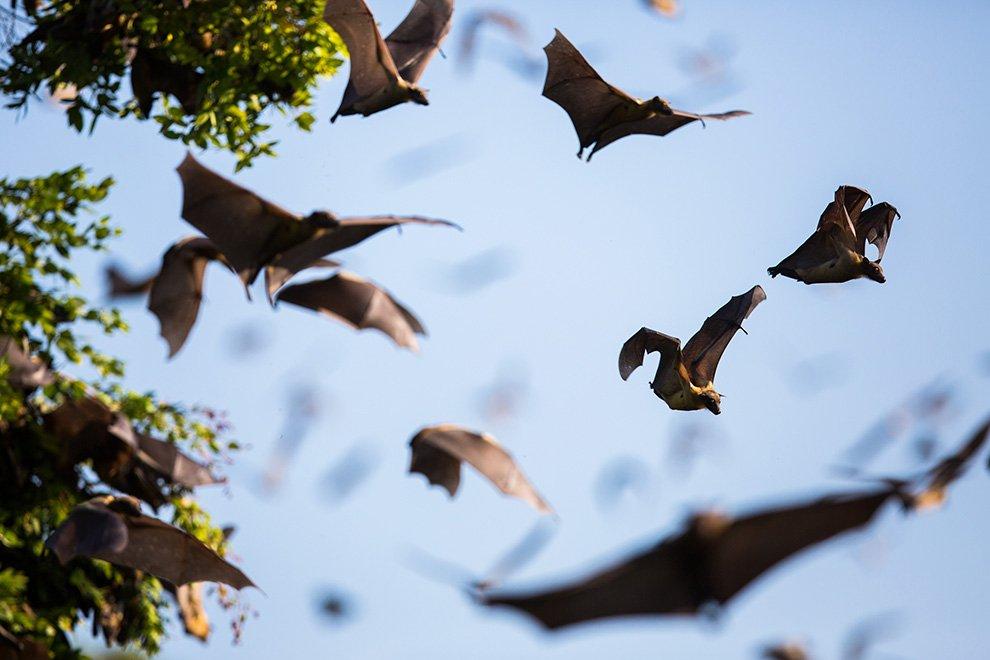 Британский фотограф Уилл Баррард Лукас снял необычную картину в небе над Национальным парком Ка