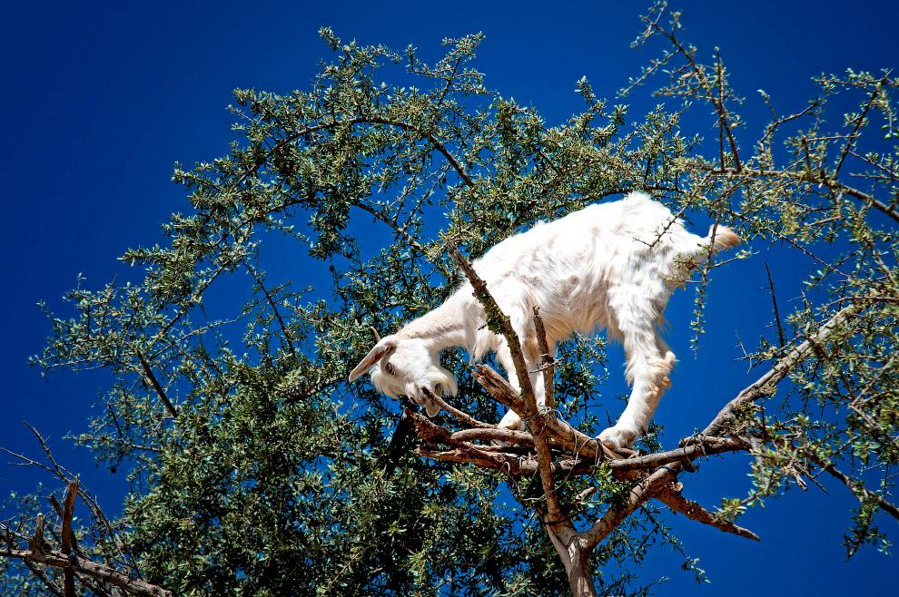 Хорошо и прохладно. Белый медведь в парке дикой природы в Великобритании. (Фото Russell Cheyne   Reu