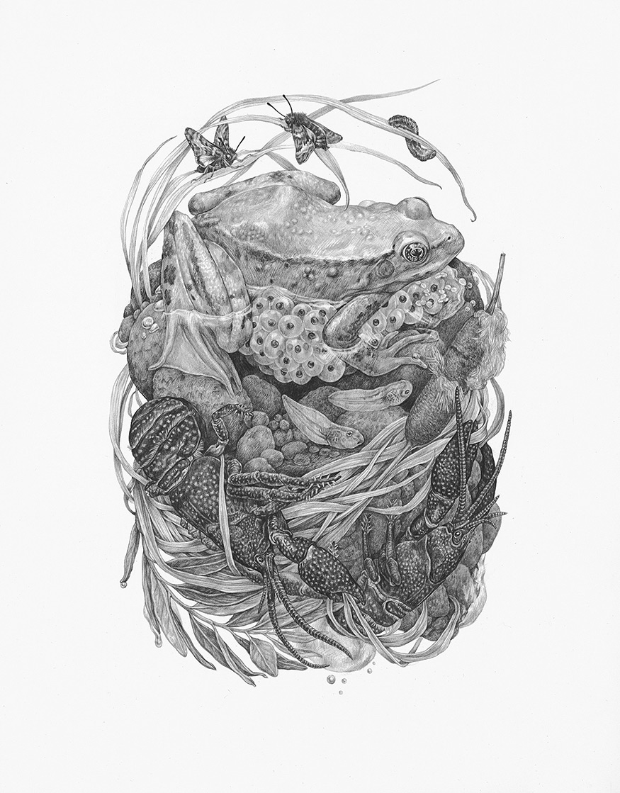 Graphite Illustrations That Explore the Detailed Relationships of the Natural World by Zoe Keller