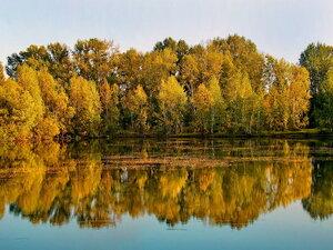 Любовалась осень на золотой наряд