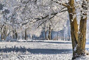Зима в Гомеле (17)