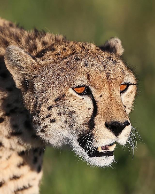 0 180288 df0dfd31 orig - Портреты диких животных