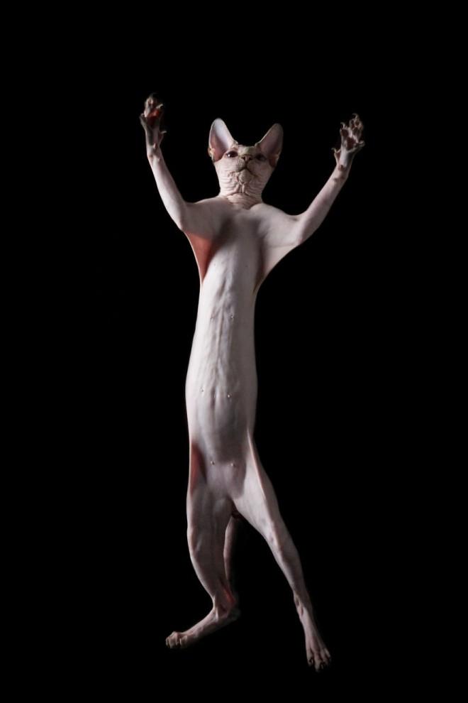 Инопланетные сфинксы в фотографиях Алисии Риус