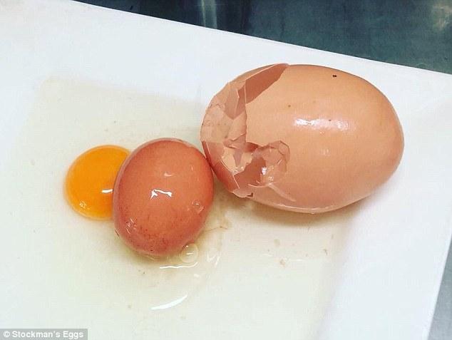 Австралия курицы находка размер рекорд сюрприз ферма яйцо
