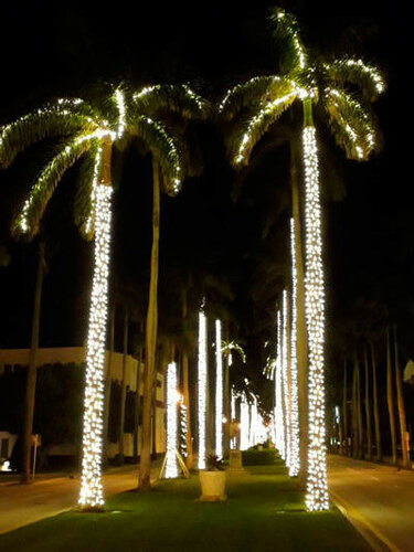 Palmtrees, West Palm Beach