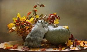 Ты такая красивая, осень!!!