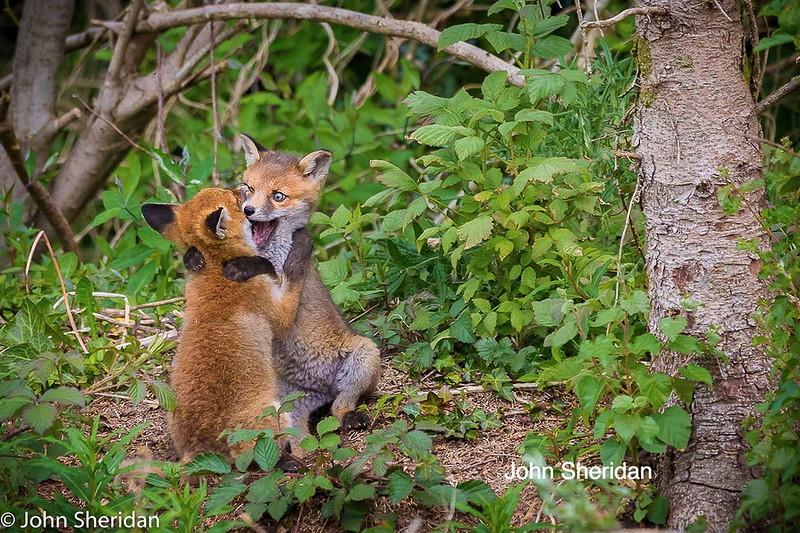 0 180c54 ae65d9e2 orig - Смешные фотографии диких животных