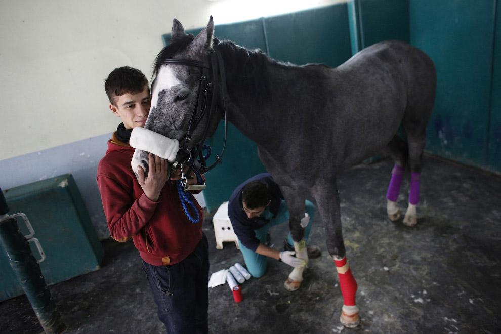 После выздоровления многие лошади снова попадут на ипподром, а это значит будут новые травмы. Ч
