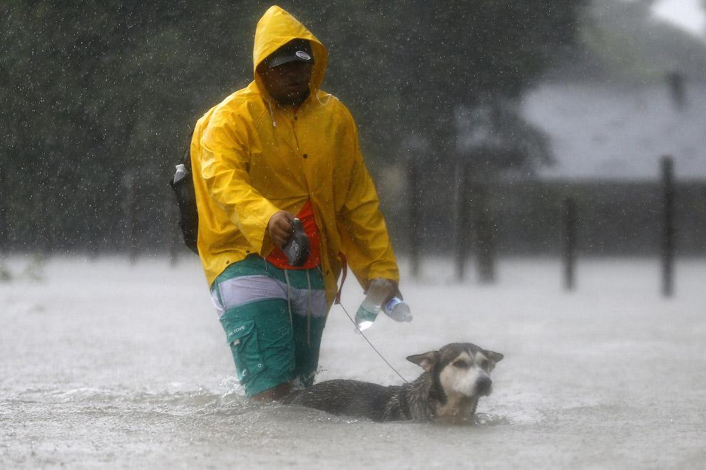 Спасение собак от урагана «Харви»