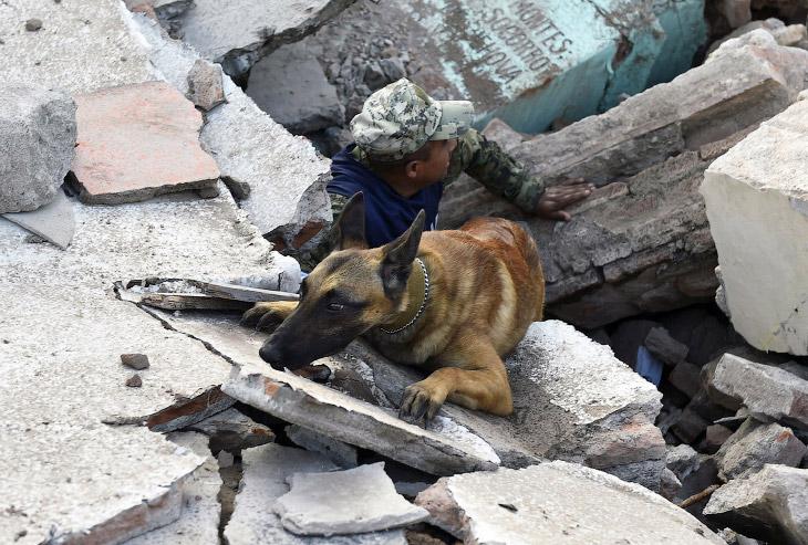 1. Обоняние — одно из самых важных чувств собаки. но зависит от породы, но все собаки намного превос