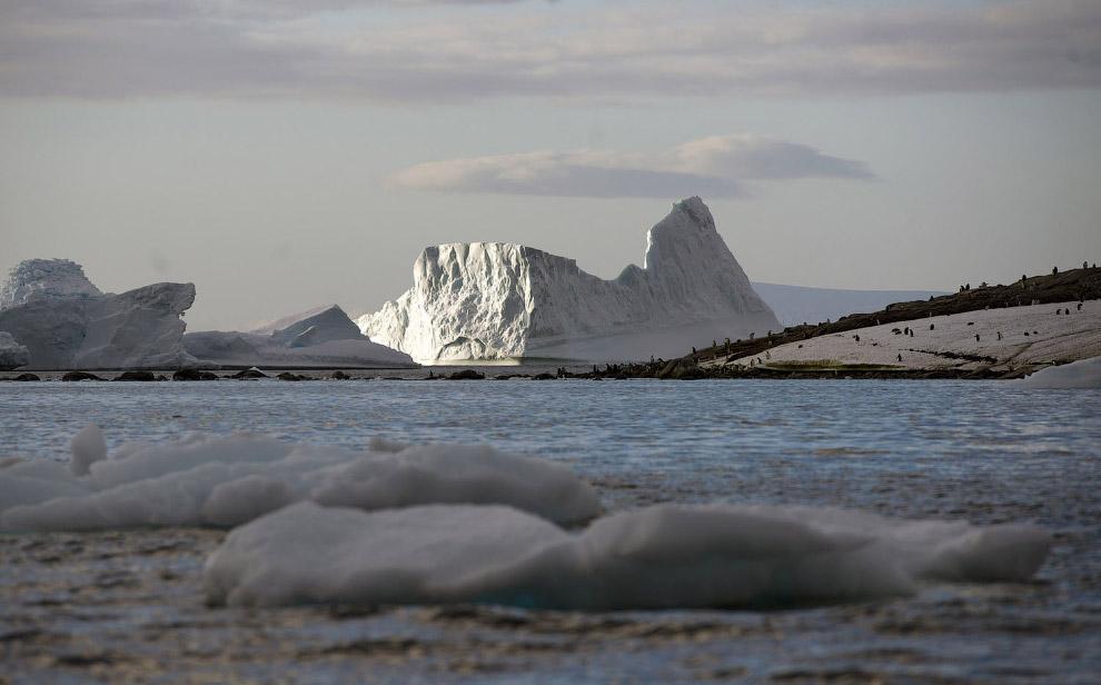 23. Кит дышит морозным воздухом!. (Фото Ari Friedlaender | National Science Foundation):