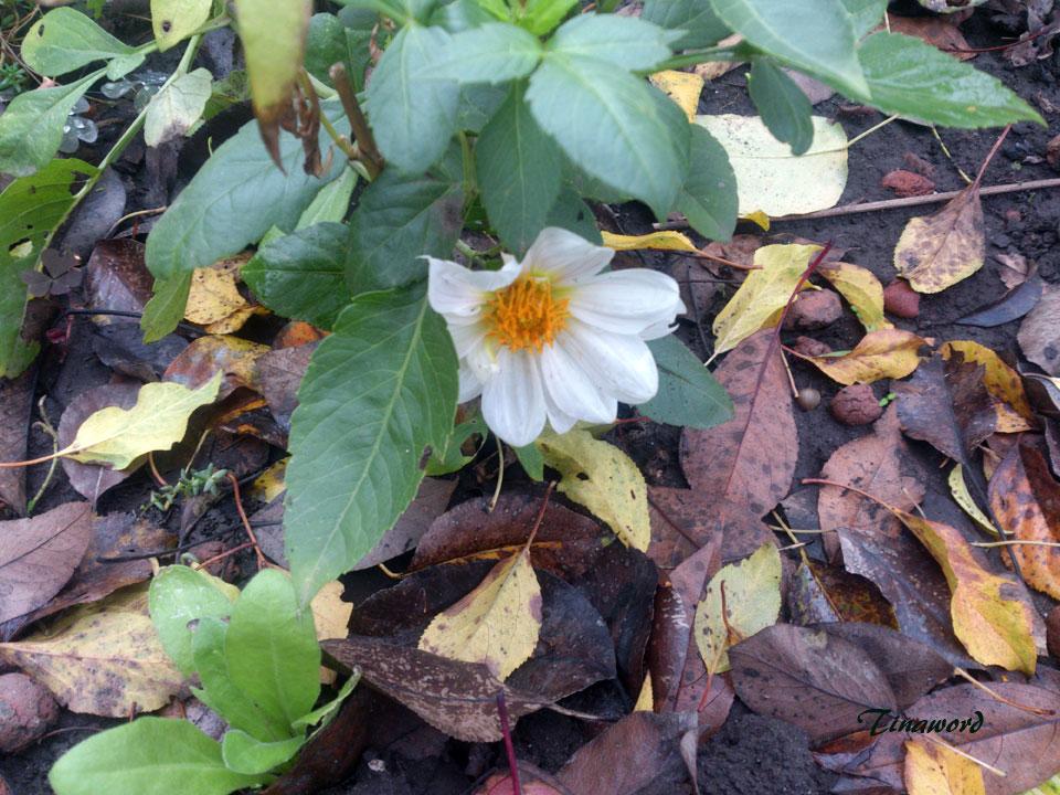 цветы-осени-61.jpg