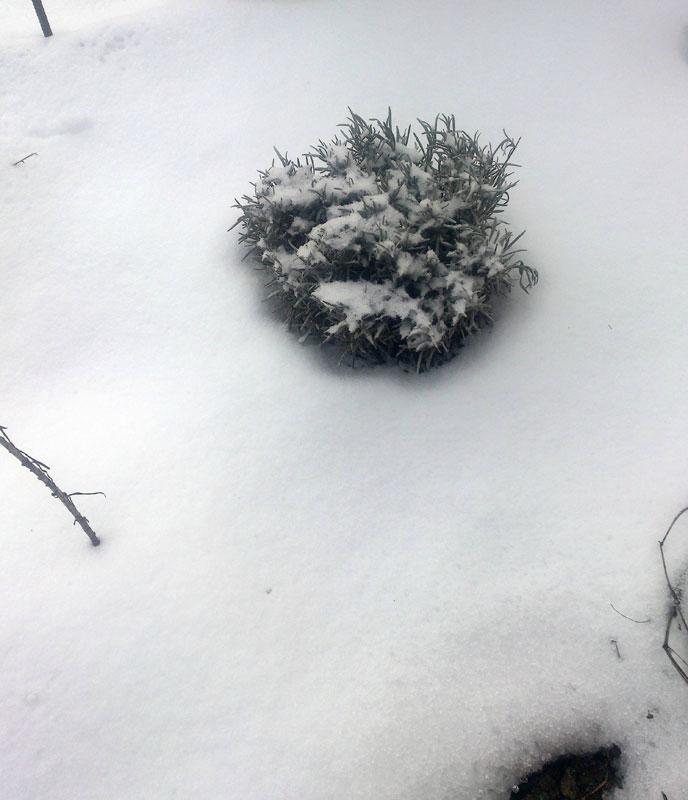 снег-011.jpg