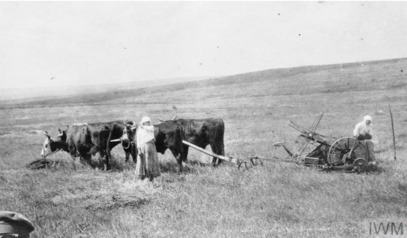 Местные женщины занимаются сельскохозяйственными работами в Донской степи, лето 1919