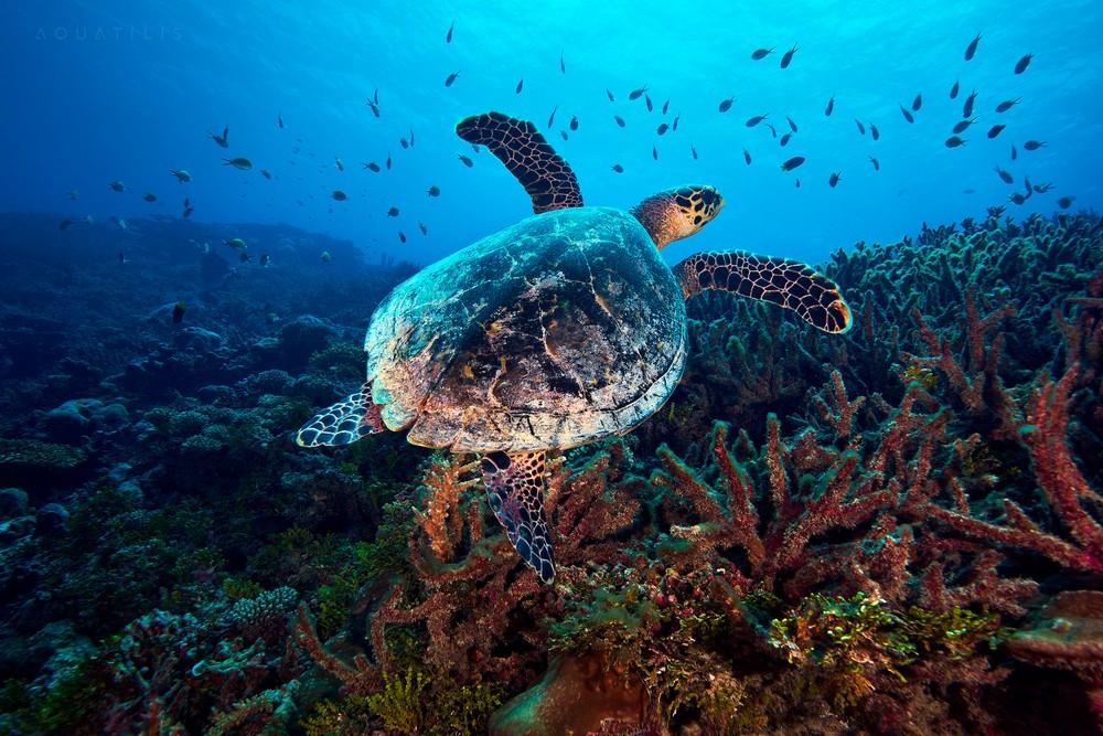 Подводный мир на снимках Александра Семёнова