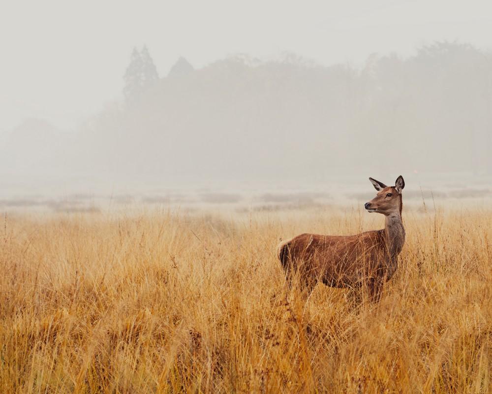 Животные и природа на снимках Иды Холлис
