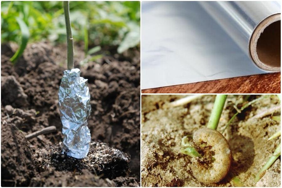 5 способов использования алюминиевой фольги в садоводстве