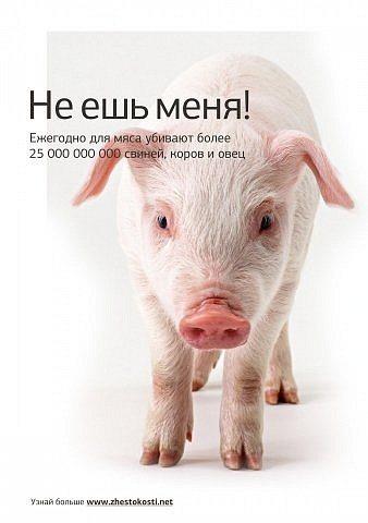 1 ноября. Всемирный день вегана. Не ешь меня!