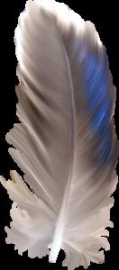 перья голубые