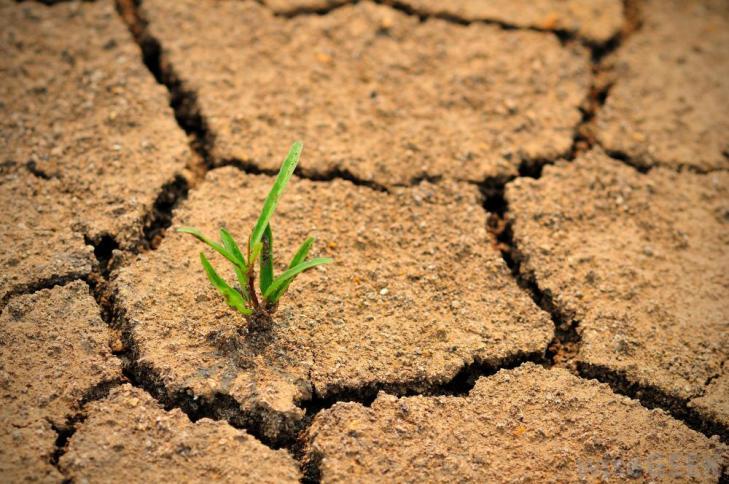Всемирный день борьбы с опустыниванием и засухой.jpg