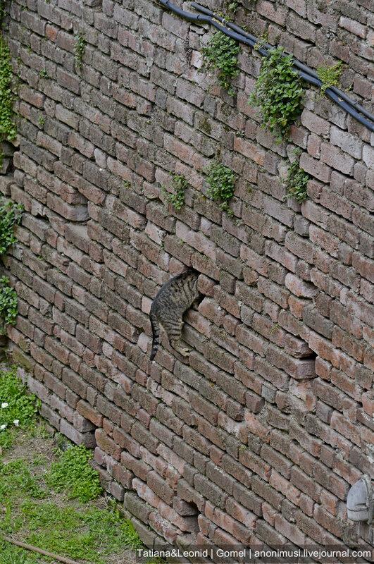 Коты замка Сфорца в Милане