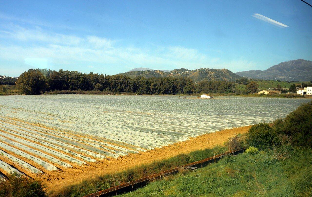 Train Malaga - El Chorro. Rural landscape