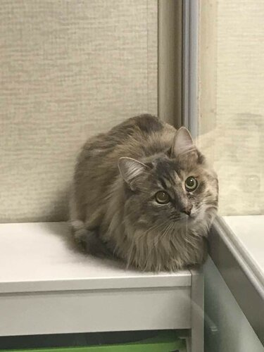 Ирбис кот из приюта догпорт