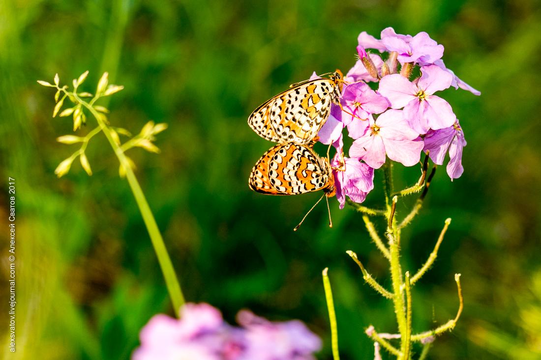 Это снимки середины июня, но цветы здесь цветут всё лето.
