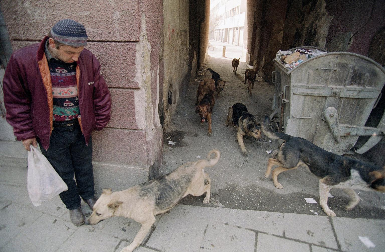 Поскольку борьба с бродячими собаками в Боснии и Герцоговине ограничивается тем, что их отлавливают,